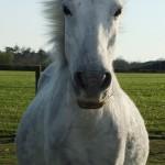 Chichester Copywriter - pregnant pony