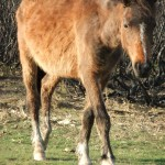Chichester Copywriter - suave pony
