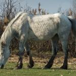 Chichester Copywriter - munching pony