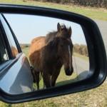 Chichester Copywriter - posing pony