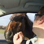 Chichester Copywriter - friendly pony