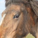 Chichester Copywriter - pretty pony