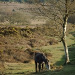 Chichester Copywriter - pony and tree