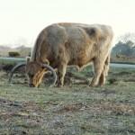 Chichester Copywriter - mighty bull