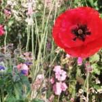 BignorWeedWildflower4