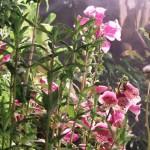 BignorWeedWildflower5