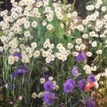 BignorWeedWildflower6