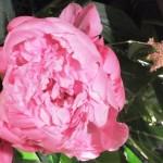 Chichester Copywriter - Festival of Flowers 10