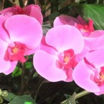 Chichester Copywriter - Festival of Flowers 11