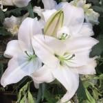 Chichester Copywriter - Festival of Flowers 14