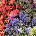 Chichester Copywriter - Festival of Flowers 19