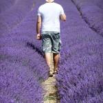 Chichester Copywriter - Lordington Lavender 7