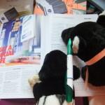Chichester Copywriter - office tapirs 4