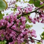 Chichester Copywriter - pink blossom
