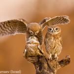 WildlifePhotographeroftheYear2