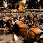 WildlifePhotographeroftheYear3