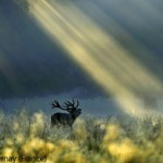 WildlifePhotographeroftheYear9