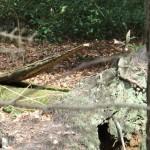 Woodland croc - Chichester Copywriter