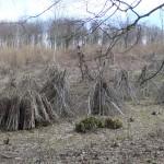woodland wig wams